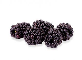 Hygiene Dutch Blackberries