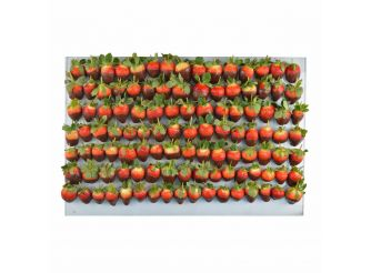 Gourmet Belgian Chocolate Dipped Strawberry Platter - Large Platter