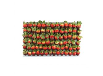 Gourmet Belgian Chocolate Dipped Strawberry Platter - Medium Rectangle