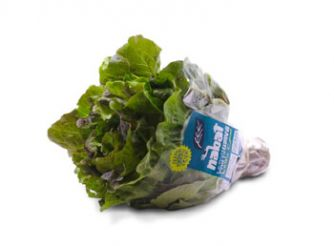 Nabat Green & Red Batavia Lettuce