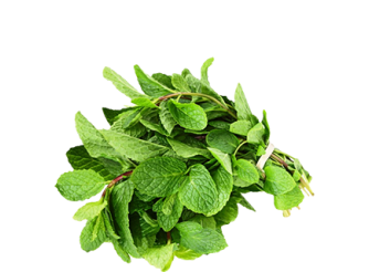Fresh Food Mint